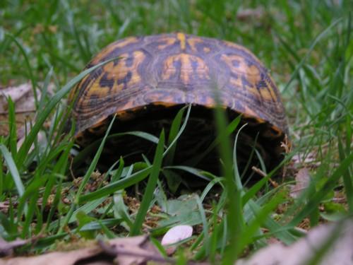 Peek.turtle