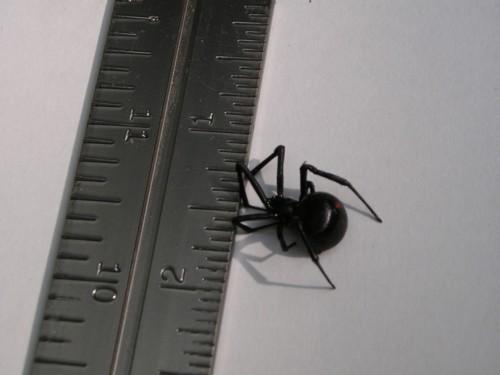 Peek.spider